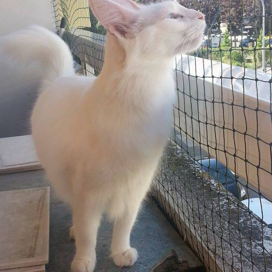 filet pour chat sur balcon avec un chat blanc