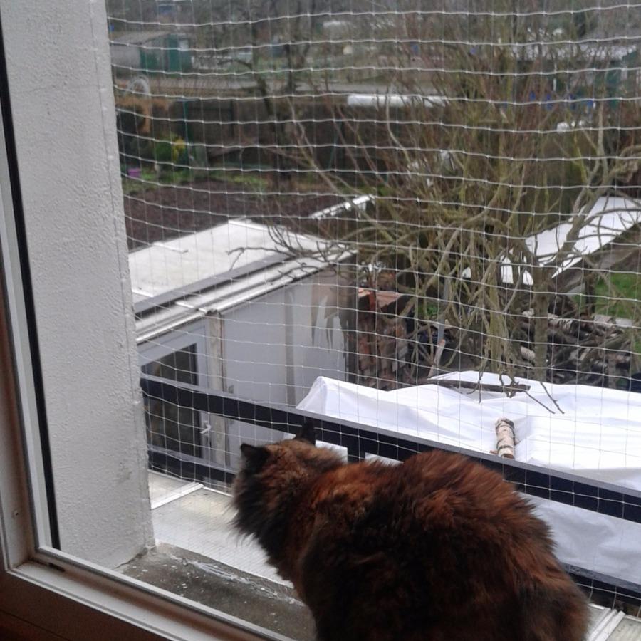 Securiser un balcon pour chat - Filet fenetre chat ...