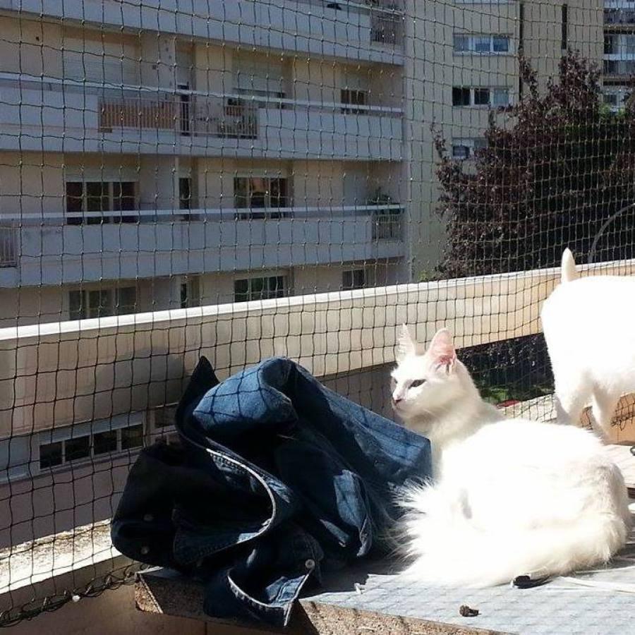 Deux chats blanc avec un filet de protection pour chat vert olive