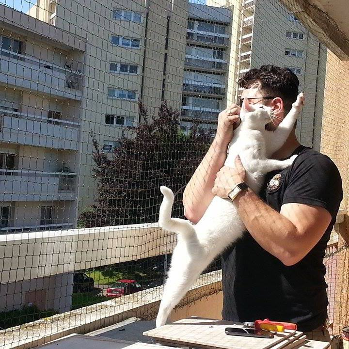 Filet pour chat pose de filet de protection pour chat - Grillage fenetre chat ...